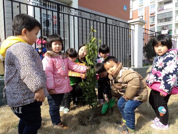 """上派镇幼儿园开展""""我和小树共成长""""植树节活动"""